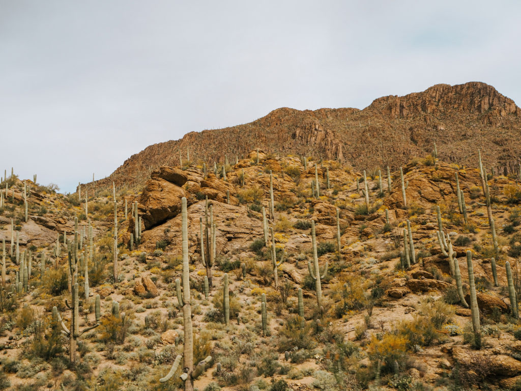 Tucson Arizona Nationalpark