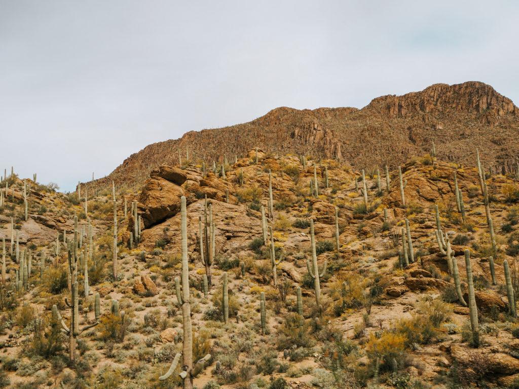 Tucson Arizona Nationalpark