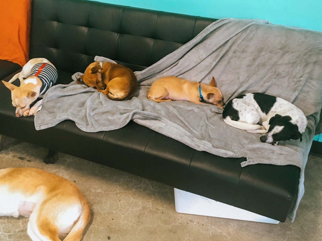 Nap time at the Dog Cafe