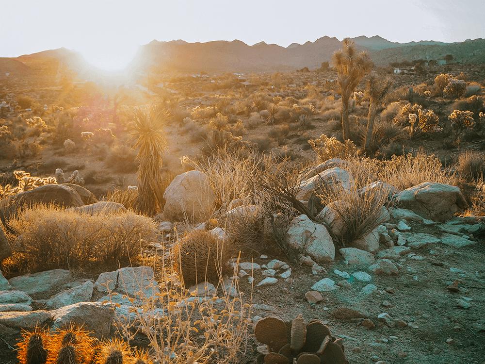 Golden Hour in Joshua Tree during Sunrise