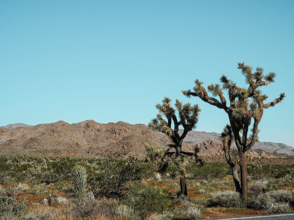Joshua Tree Must-Visit National Park in the Southwest