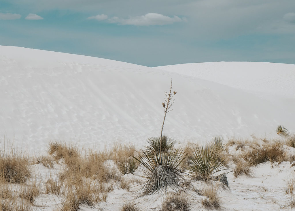 Sand Dunes and Agave Plants at White Sands National Monument
