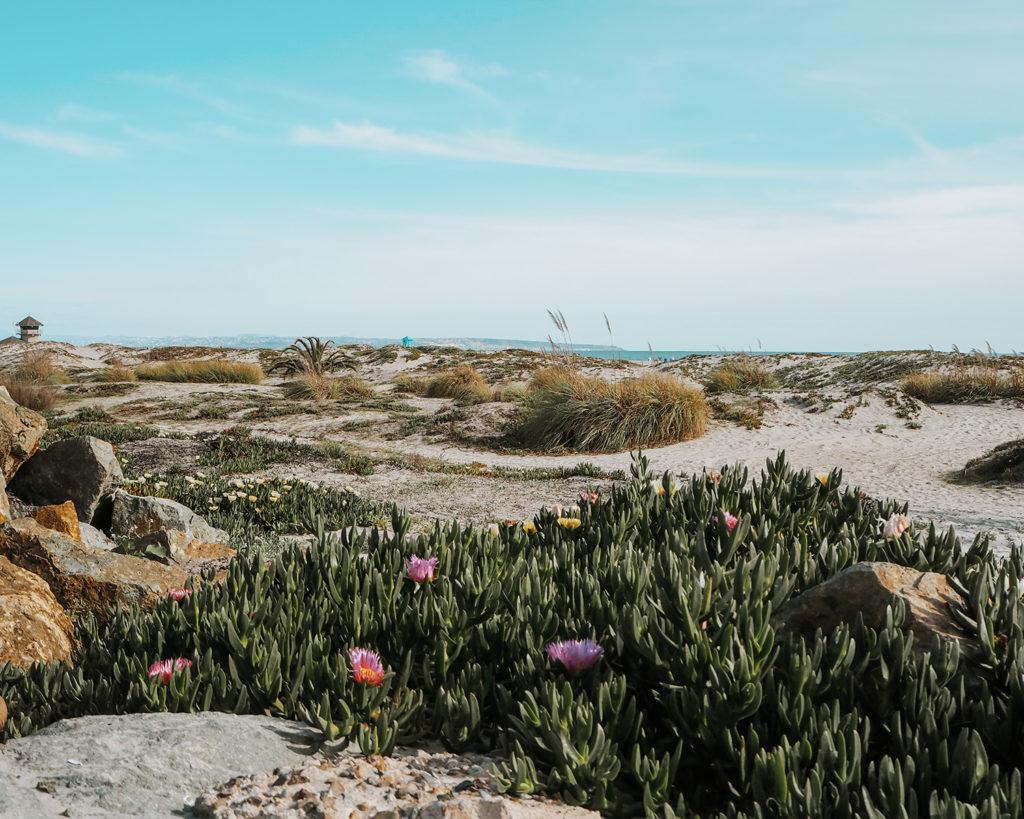 Most beautiful Beaches in California Coronado Beach View