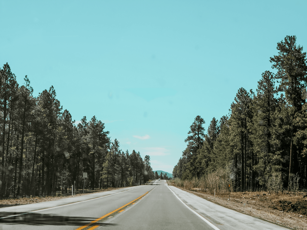 Southwest Road Trip image shows a road aligned by pine trees in Flagstaff, Arizona
